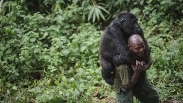 El curioso selfie que muestra a unos gorilas de pie y posando