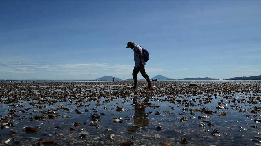 Moluscos mueren por causa no identificada en costas de La Unión