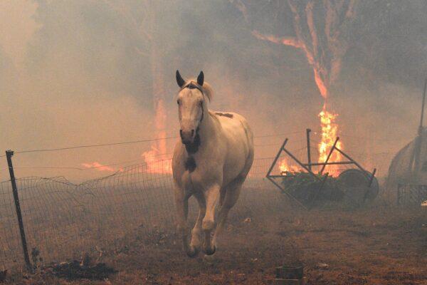 Más de 1,000 millones de animales han muerto en Australia
