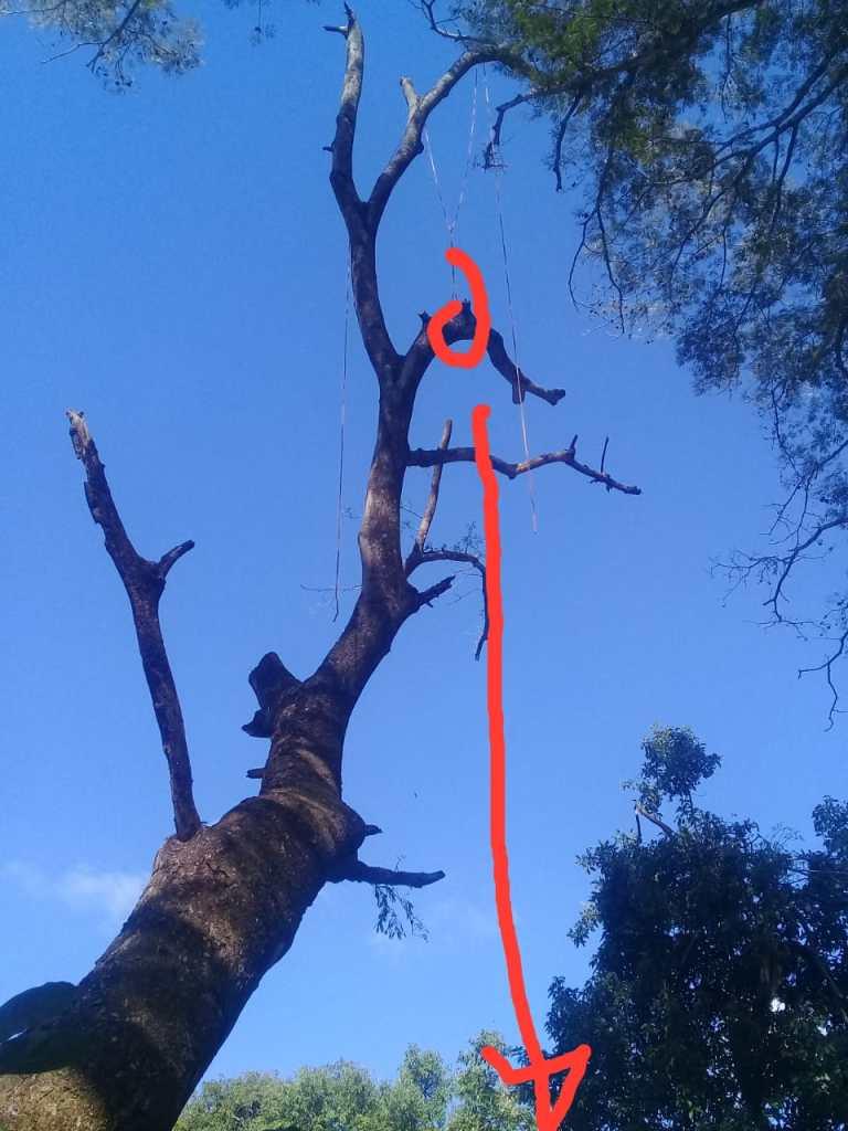 Hombre fallece tras caer de un árbol en Chinameca, San Miguel