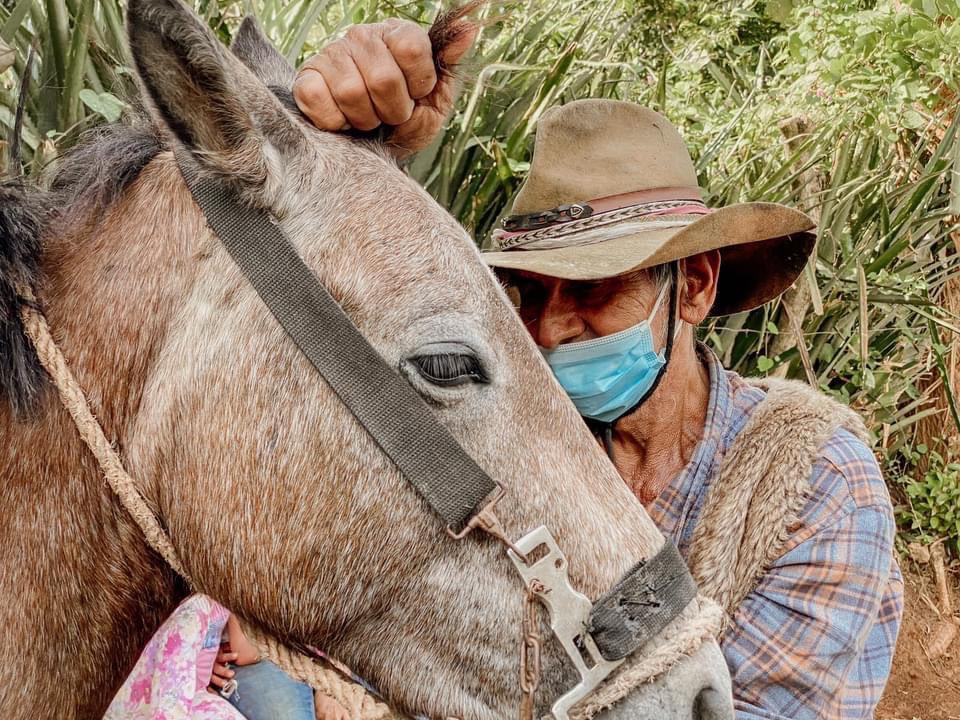 caballo justiciero